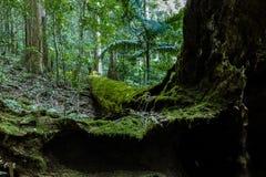 Albero muscoso verde in legno fotografie stock