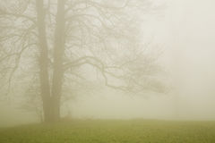 Albero in nebbia Immagini Stock
