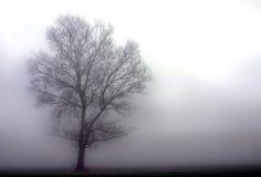 Albero in nebbia fotografie stock