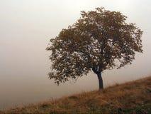 Albero in nebbia Fotografie Stock Libere da Diritti