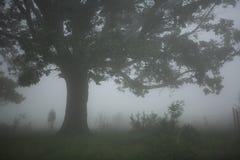 Albero nebbioso fotografie stock