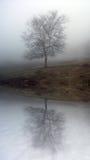 Albero nebbioso Fotografia Stock