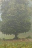 Albero nebbioso Fotografia Stock Libera da Diritti