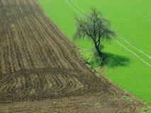 albero nei campi immagine stock