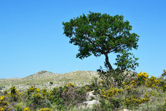 Albero nei hillocks. Fotografie Stock