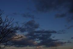 Albero nei precedenti delle nuvole temporalesche Fotografia Stock