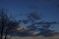 Albero nei precedenti delle nuvole temporalesche Fotografia Stock Libera da Diritti