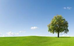Albero nel bello paesaggio Fotografia Stock Libera da Diritti