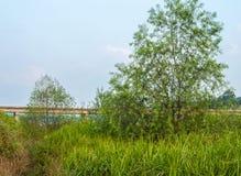 Albero nel campo di erba alta Fotografia Stock Libera da Diritti