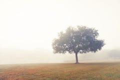 Albero nel campo nebbioso Immagini Stock