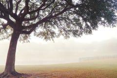Albero nel campo nebbioso Fotografia Stock