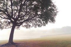 Albero nel campo nebbioso Immagine Stock
