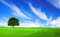 Albero nel campo verde Fotografia Stock