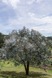 Albero nel campo verde con cielo blu fotografia stock
