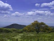 Albero nel campo vicino alle montagne Fotografia Stock Libera da Diritti