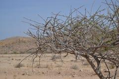 Albero nel deserto Immagine Stock
