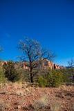 Albero nel deserto dell'Arizona Fotografie Stock