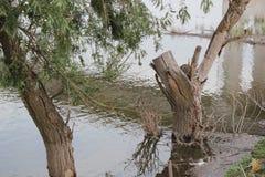 Albero nel fiume Fotografia Stock Libera da Diritti