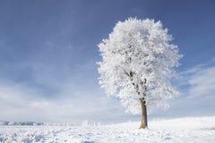 Albero nel gelo Immagini Stock Libere da Diritti