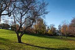 Albero nel giardino Immagine Stock