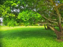 Albero nel giardino fotografia stock