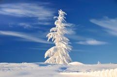 Albero nel Natale di brina Fotografie Stock Libere da Diritti