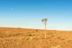 Albero nel paesaggio del deserto di Namib Fotografia Stock