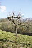 Albero nel paesaggio rurale tedesco Immagini Stock