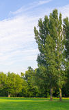 Albero nel parco al giorno soleggiato Immagine Stock Libera da Diritti
