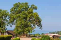 Albero nel parco con la bella vista sul mare Fotografie Stock