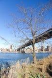 Albero nel parco di Main Street a New York immagini stock libere da diritti