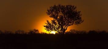 Albero nel sundowner africano Immagine Stock Libera da Diritti
