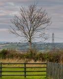 Albero nel terreno coltivabile rurale dell'Irlanda del Nord Fotografie Stock