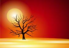 Albero nel tramonto Fotografia Stock
