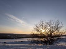 Albero nel tramonto all'inverno fotografia stock libera da diritti