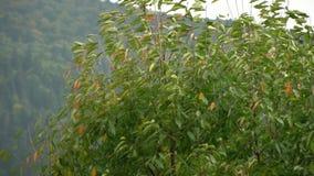 Albero nel vento Il vento strappa le foglie fuori dall'albero fogli di caduta di autunno Movimento lento video d archivio