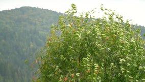 Albero nel vento Il vento strappa le foglie fuori dall'albero fogli di caduta di autunno Movimento lento stock footage