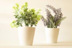Albero nel verde e lavanda in vaso nel fondo molle di tono Fotografia Stock