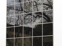 Albero nel vetro Fotografia Stock Libera da Diritti
