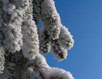 Albero nell'inverno Immagine Stock Libera da Diritti