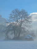 Albero nell'inverno Immagini Stock