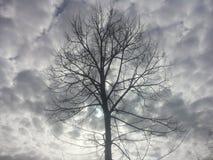 Albero nell'inverno Fotografia Stock Libera da Diritti