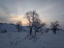 Albero nell'inverno al tramonto fotografia stock libera da diritti