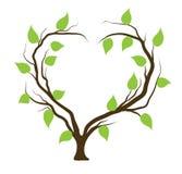 albero nella figura del cuore Fotografia Stock