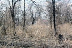 Albero nella foresta Immagine Stock