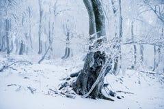 Albero nella foresta fredda di inverno coperta di gelo Fotografia Stock Libera da Diritti