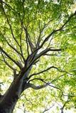 Albero nella foresta, legno verde della natura, ambiti di provenienza di luce solare Fotografia Stock