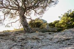 Albero nella lampadina del sole Fotografia Stock