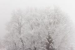 Albero nella nebbia con neve fotografia stock libera da diritti