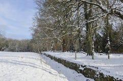 Albero nella neve Fotografia Stock
